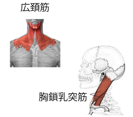 顎関節症と関連性のある筋肉