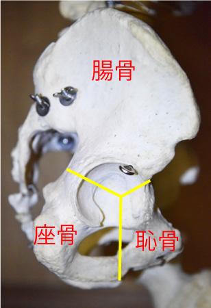 骨盤矯正図