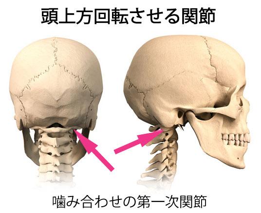 第一頸椎と噛み合わせ