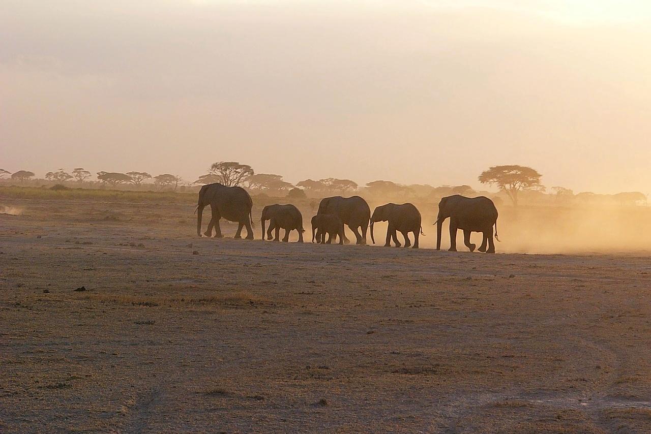 Elefanten im Amboseli Nationalpark