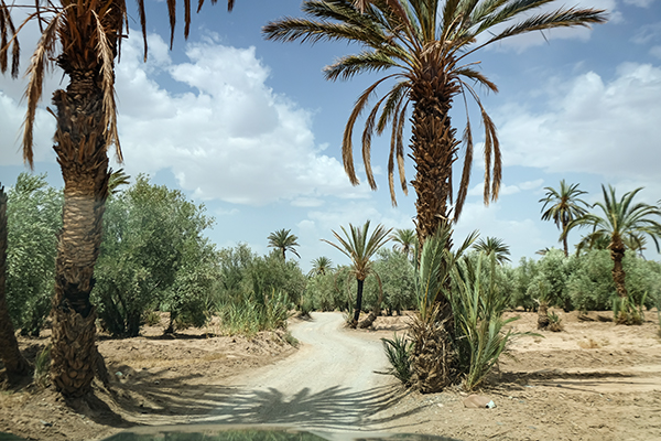 Oase mit Palmen und Olivenbäumen