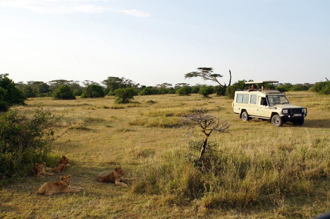 Ihr Safari-Jeep