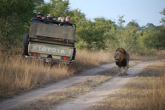 Pirschfahrt auf einer Afrika Safari