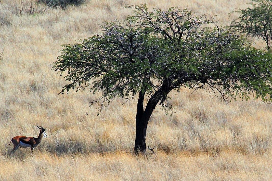 Kalahari Landschaften