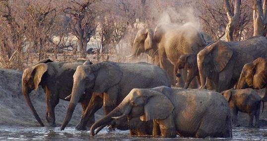 Elefanten auf einer Botswana Safari