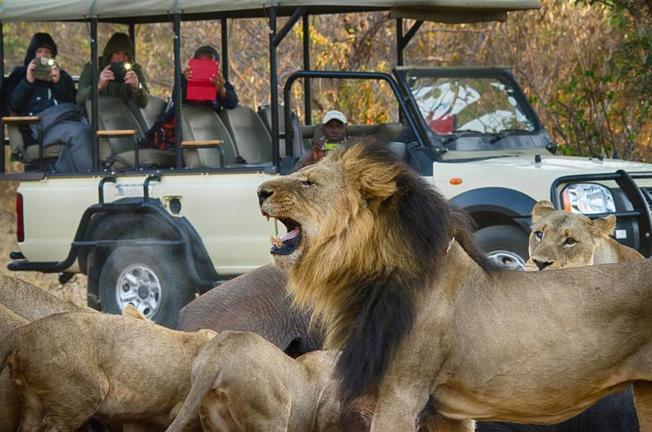 Pirschfahrten im Chobe
