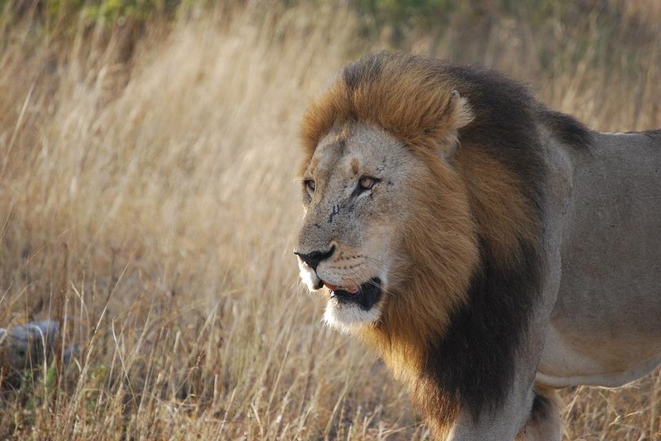 Safari-Beobachtungen in Südafrika