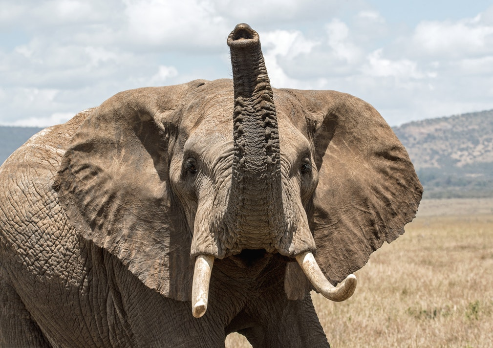 Elefant im Amboseli Nationalpark