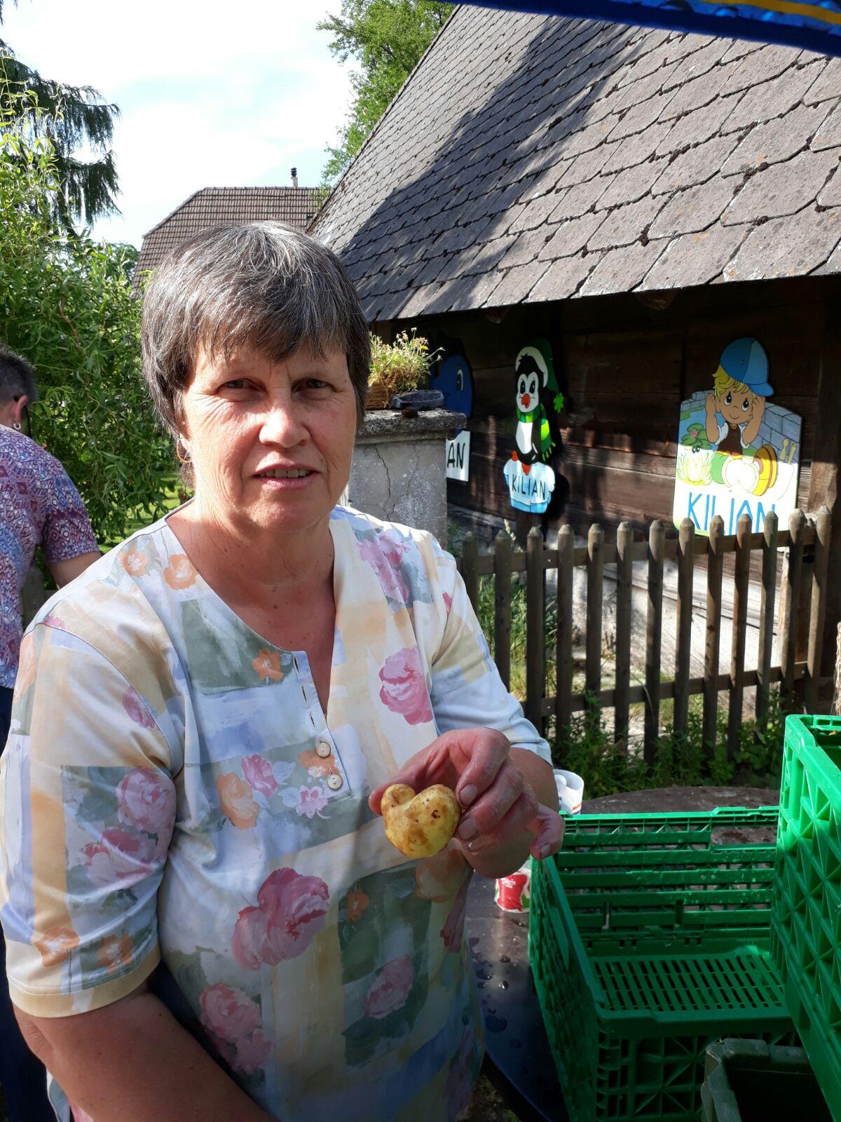 """....die Kartoffeln kommen an. In der Abteilung """"nur die schönsten Kartoffeln kommen in die Pfanne"""" erfolgt die Aussortierung....."""
