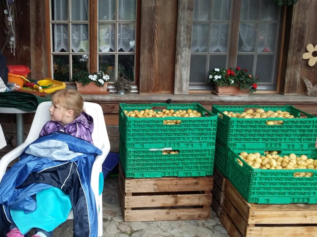 gut bewacht warten die Kartoffeln auf den Abtransport zum Steamen ins Altersheim am Bach in Gerlafingen