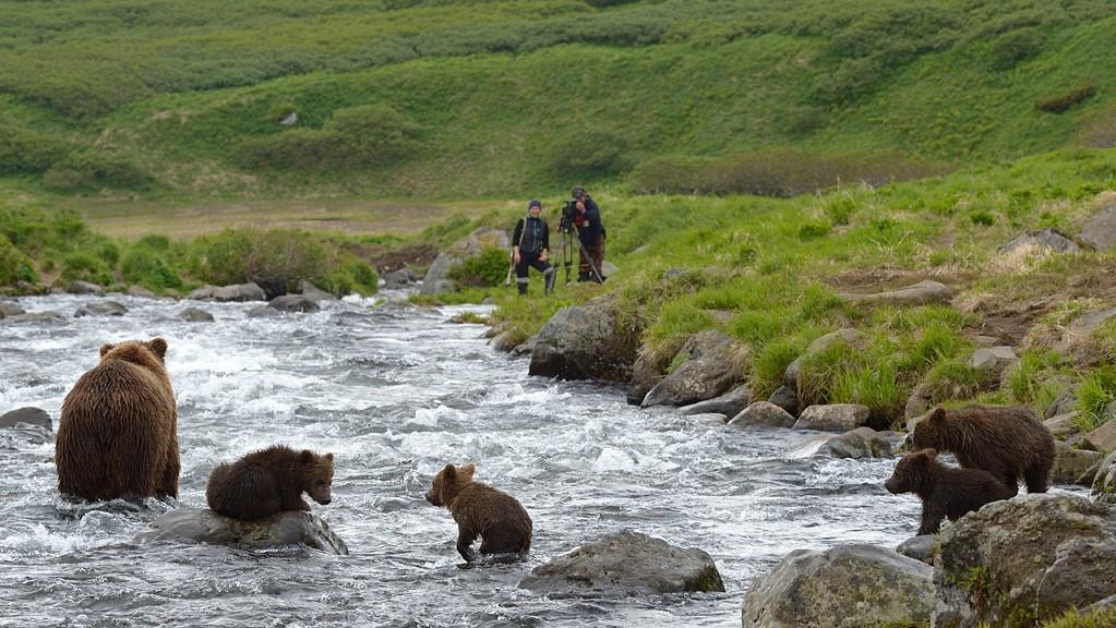 Watching bears catch salmon