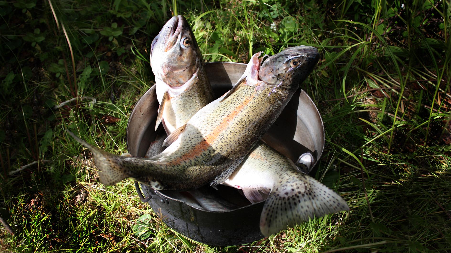Fishing on Bystraya river