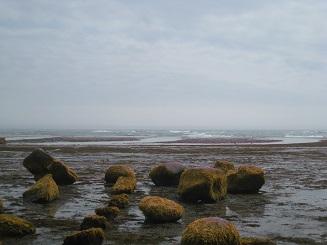 フノリ石の向こうがウニの増殖溝