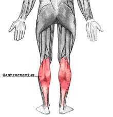 anatomie spieren benen onderbeen