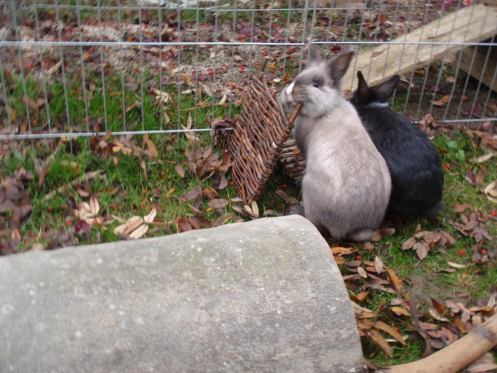 Lea und Filou im Herbst