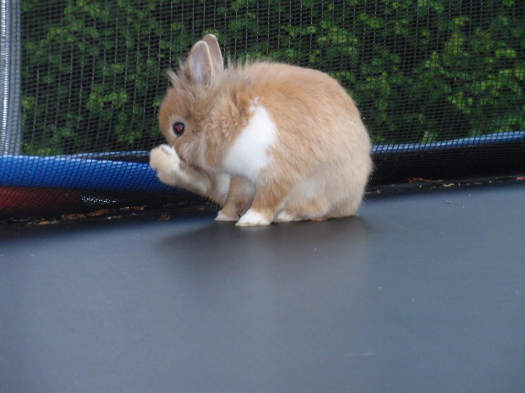 Reinlichkeit ist jedes Kaninchens Freund