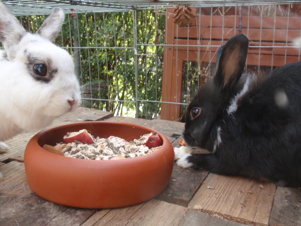 Flecki und Klein Filou beim Fressen