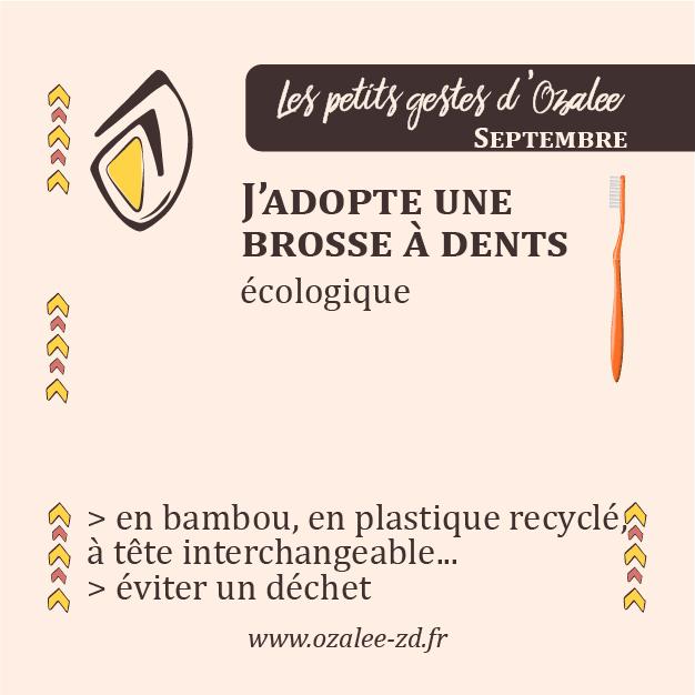 Les petits gestes d'Ozalee : en septembre, j'opte pour une brosse à dents écologique