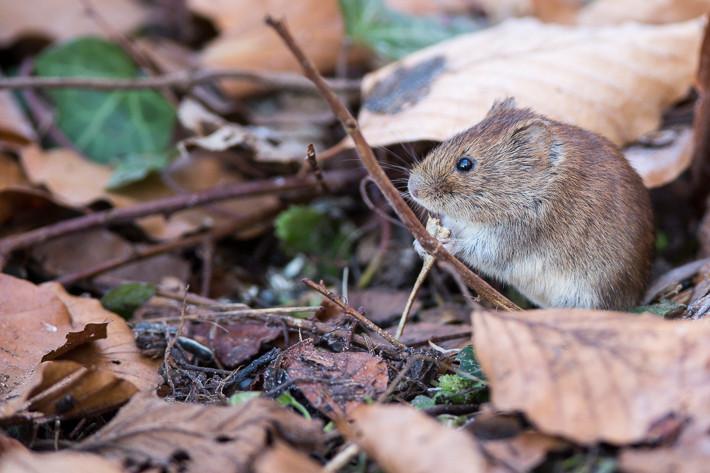 Zusätzlich hat sich eine Mäuse-Großfamilie direkt unter dem Futterhäuschen einquartiert. ;-)