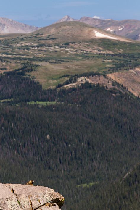 Murmeltiere... mit Ausblick auf den Forest Canyon