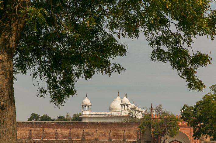 Blick hinter die Mauer auf die Moschee Moti Masjid