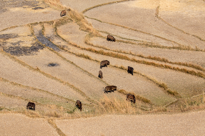 Esel und Ponys waren im Punakha Tal reichlich vertreten.