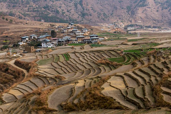 Reisfelder so weit das Auge reicht. Während der Wintermonate wird hier Weizen angebaut.