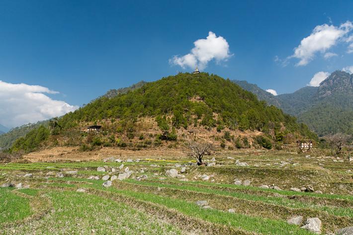 De Khamsum Yulley Namgyal Choeten mit den umliegenden Reisfeldern.