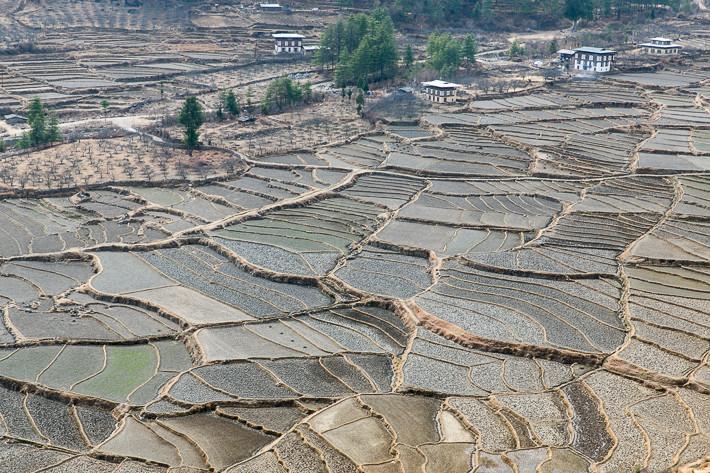 Auf den für Bhutan so typischen Terassenfeldern wird das ganze Jahr über Reis oder Getreide angebaut.