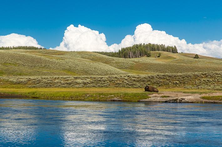 Hayden Valley mit einem Bison.