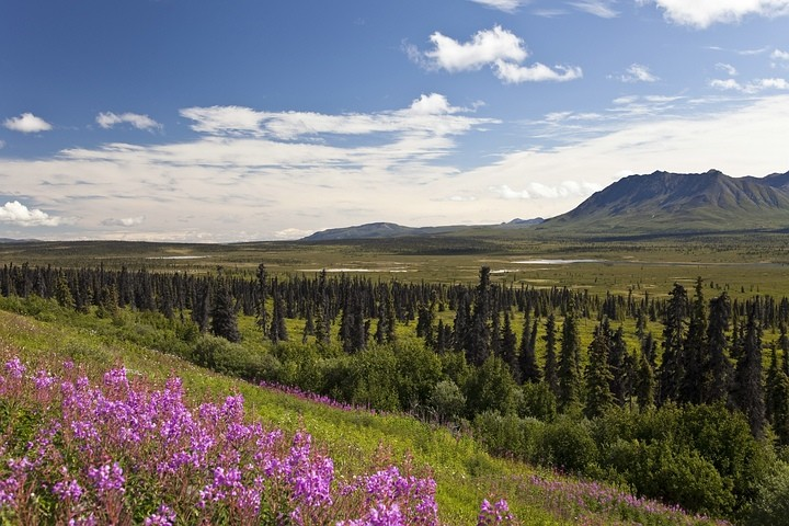 Kurz nach Glennallen bietet sich vom Glenn Highway aus ein fantastischer Blick über die weite Ebene bis zu den Chugach Mountains.