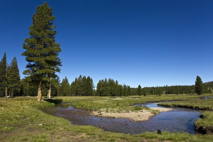 Weite Landschaft der Toulumne Meadows.