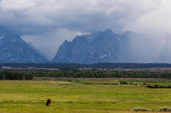 Gewitterstimmung im Grand Teton. Das Pferd war wenig beeindruckt, wir gingen schnell zurück zum Auto.