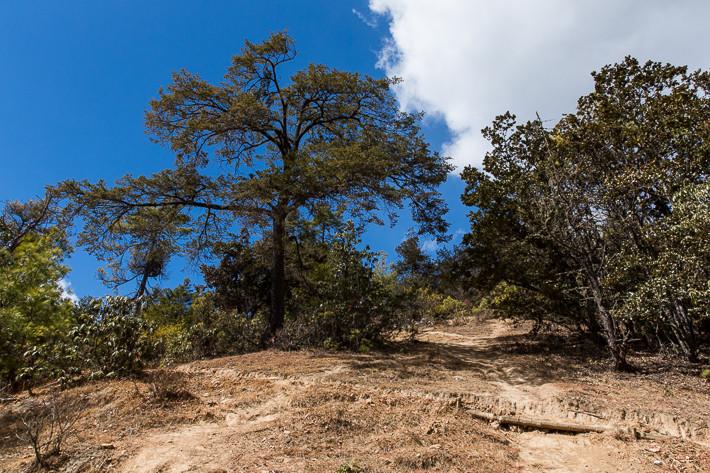 Der Fußweg relativ weit oben auf dem Berg, unmittelbar neben dem Aussichtspunkt auf das Tigernest.