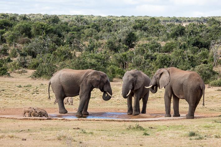 Bewohner des Parks: Sehr große und eher kleinere Säugetiere am Wasserloch.