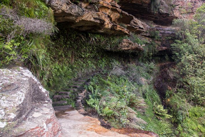 Der Undercliff Track wurde teilweise direkt in den Felsen gehauen.