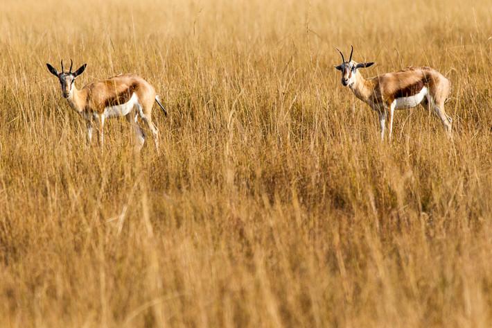 Wildlife in Swaziland, Africa