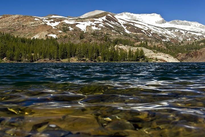 Blick auf Mount Dana vom Ufer des Ellery Lake.