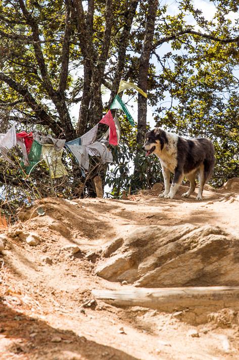 Hunde begleiteten uns auf den Weg zurück ins Tal von Paro.