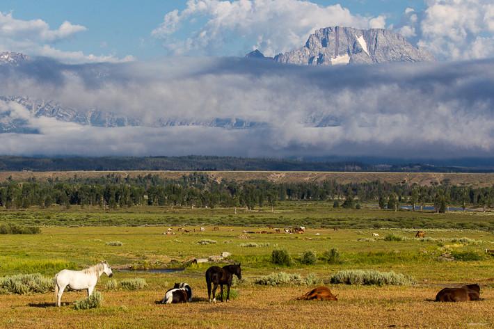 Ein kleiner Teil der Pferdeherde (ca. 150 Tiere) vor der Teton Range.