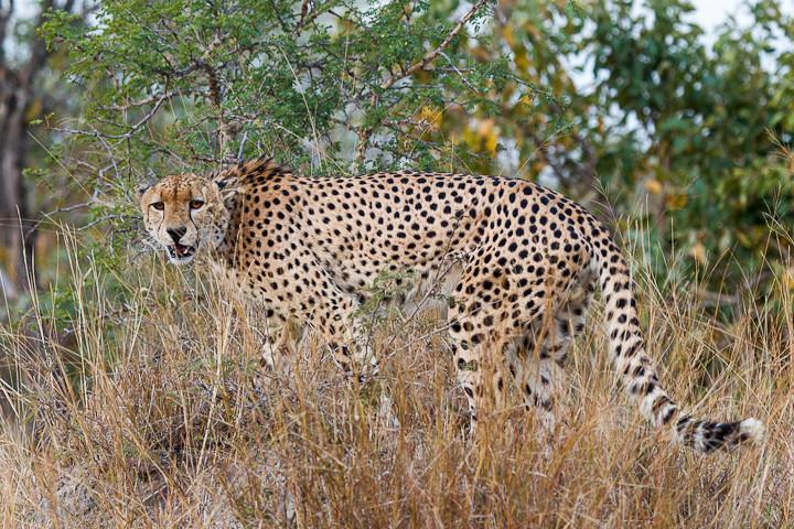 Wildlife in South Africa (June 2012)