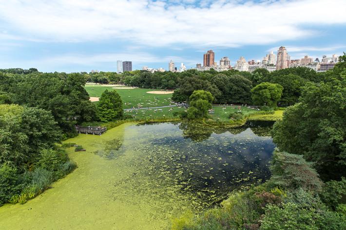 Turtle Pond - der kleine See bekam seinen Namen aufgrund der vielen Schildkröten