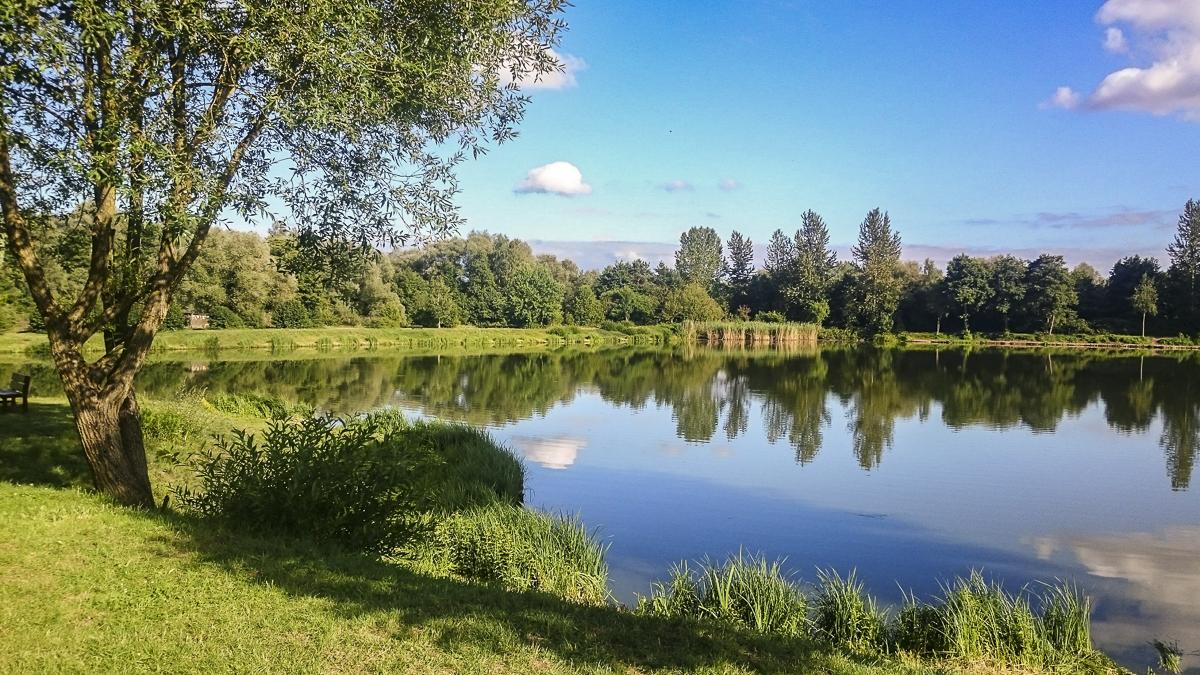 Fischweiher am Saar-Weiher-Weg