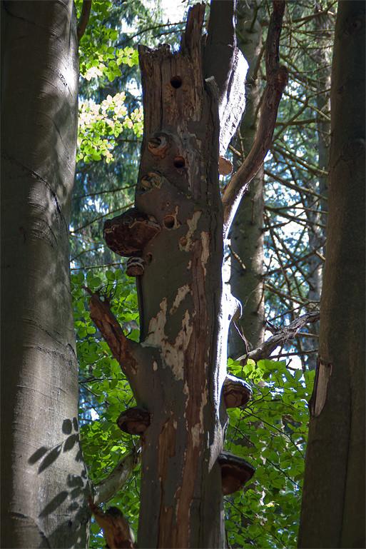 Totholz, wichtig für Spechte und Kleinstlebewesen