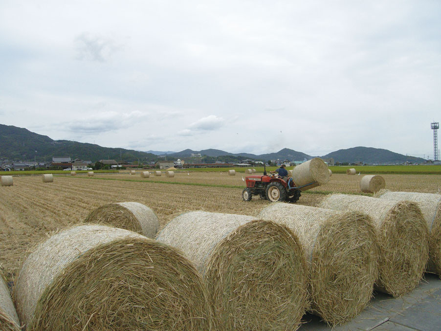 この稲藁ロール約10,000個で一年分の粗飼料をまかないます。