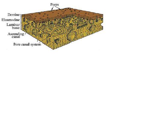 図6. コズミン構造の模式図