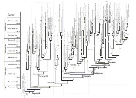 図3.デボン紀末からペルム紀末における四肢類の分岐図