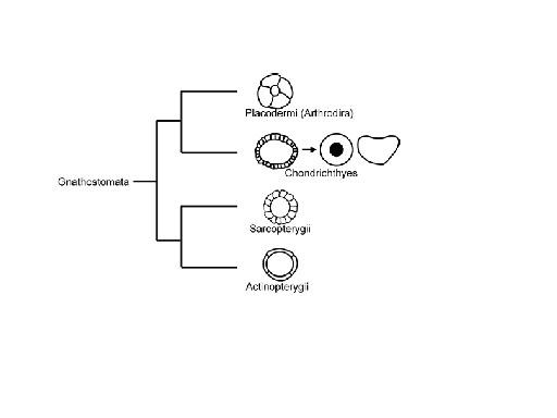 図3.OSに関する系統樹