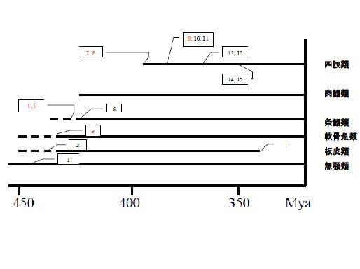 図20.対鰭から四肢への変遷