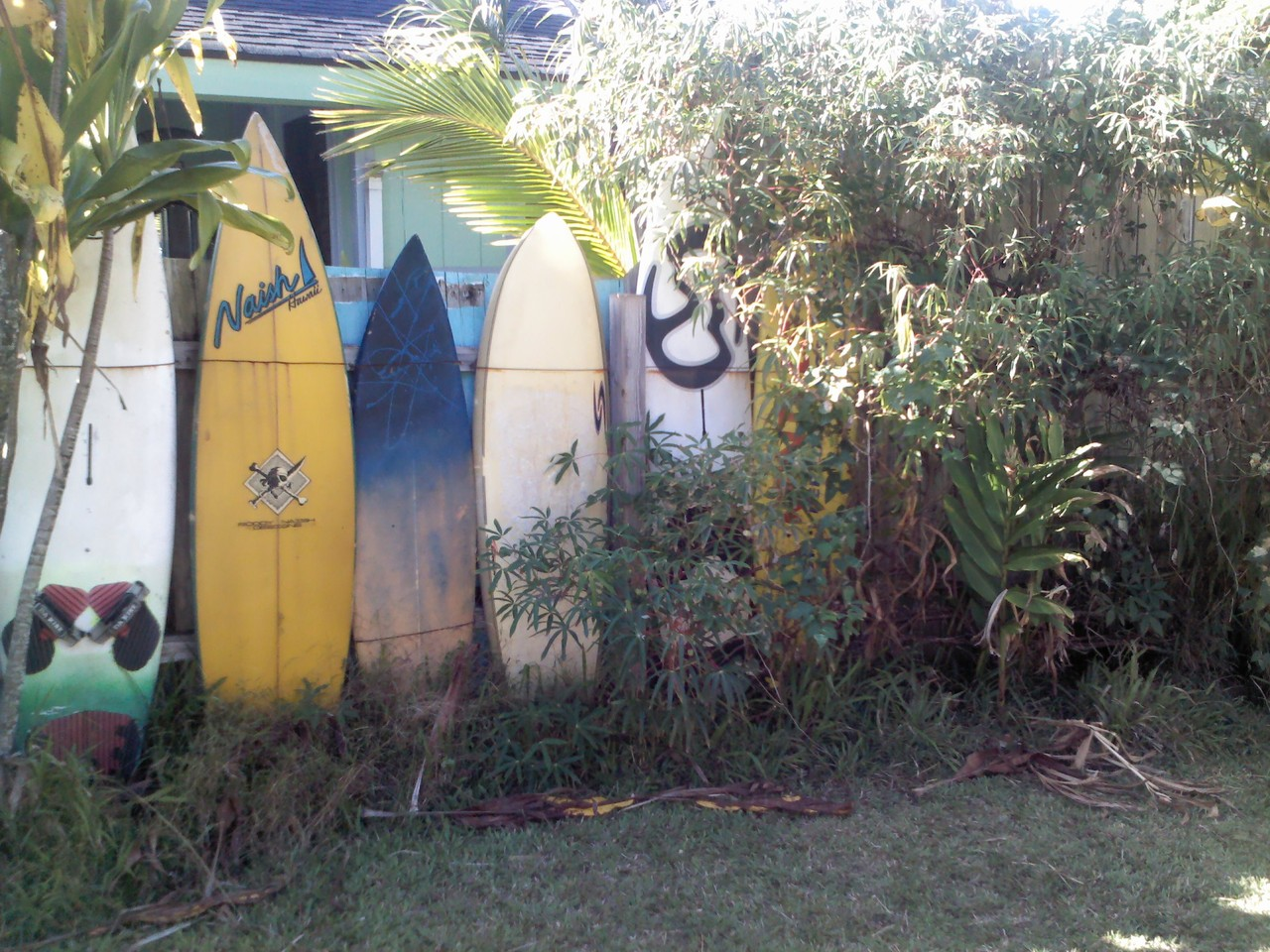 Our back garden has a Sailboardstarifa on the fence :D:D